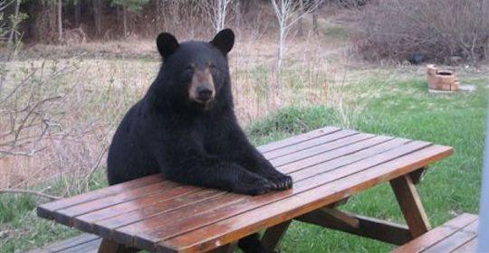 Picnic Bear likes picnics.